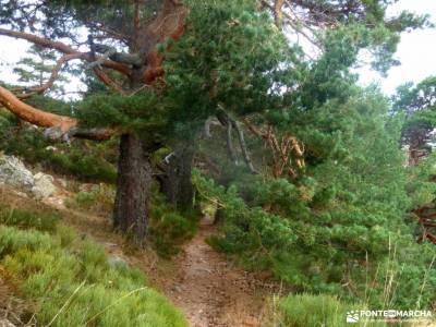 Reto senderismo-Cara Sur de la Maliciosa; puente del pilar boca del asno refugio elola